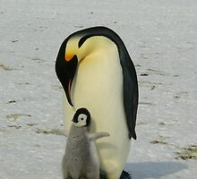 Mother And Baby Penguin  by Arizonagirl