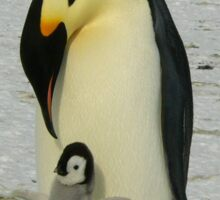 Mother And Baby Penguin  Sticker