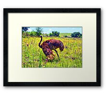 """At Home On The Range- Gauteng, South Africa"" Framed Print"