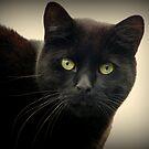 Lucky Black Cat by ElsT