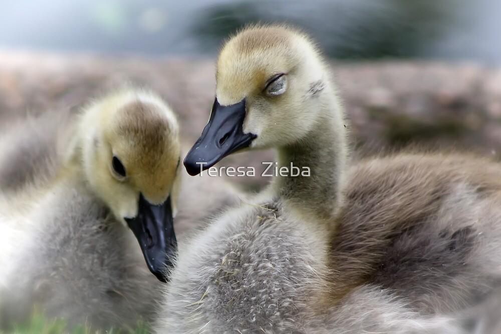 Sleepy Goslings by Teresa Zieba
