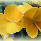 Yellow Pansies by ElsT