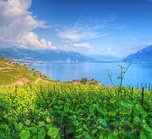Lavaux, Vineyard Terraces by Susan Dost
