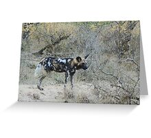 African Wild Dog 2 - Wild Afrika Greeting Card
