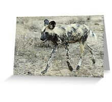 African Wild Dog - Wild Afrika Greeting Card