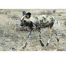 African Wild Dog - Wild Afrika Photographic Print