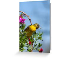 Female Baltimore Oriole Greeting Card