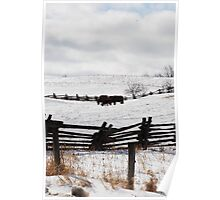 out for a graze Poster