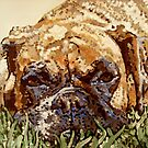 Ellie boxer dog in pop art style by artist Debbie Boyle db artstudio by Deborah Boyle