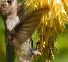 Rufous Hummingbird on Red Hot Poker T-Shirt Sticker
