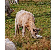 An eye for food, Monsanto, Beira Baixa, Portugal Photographic Print