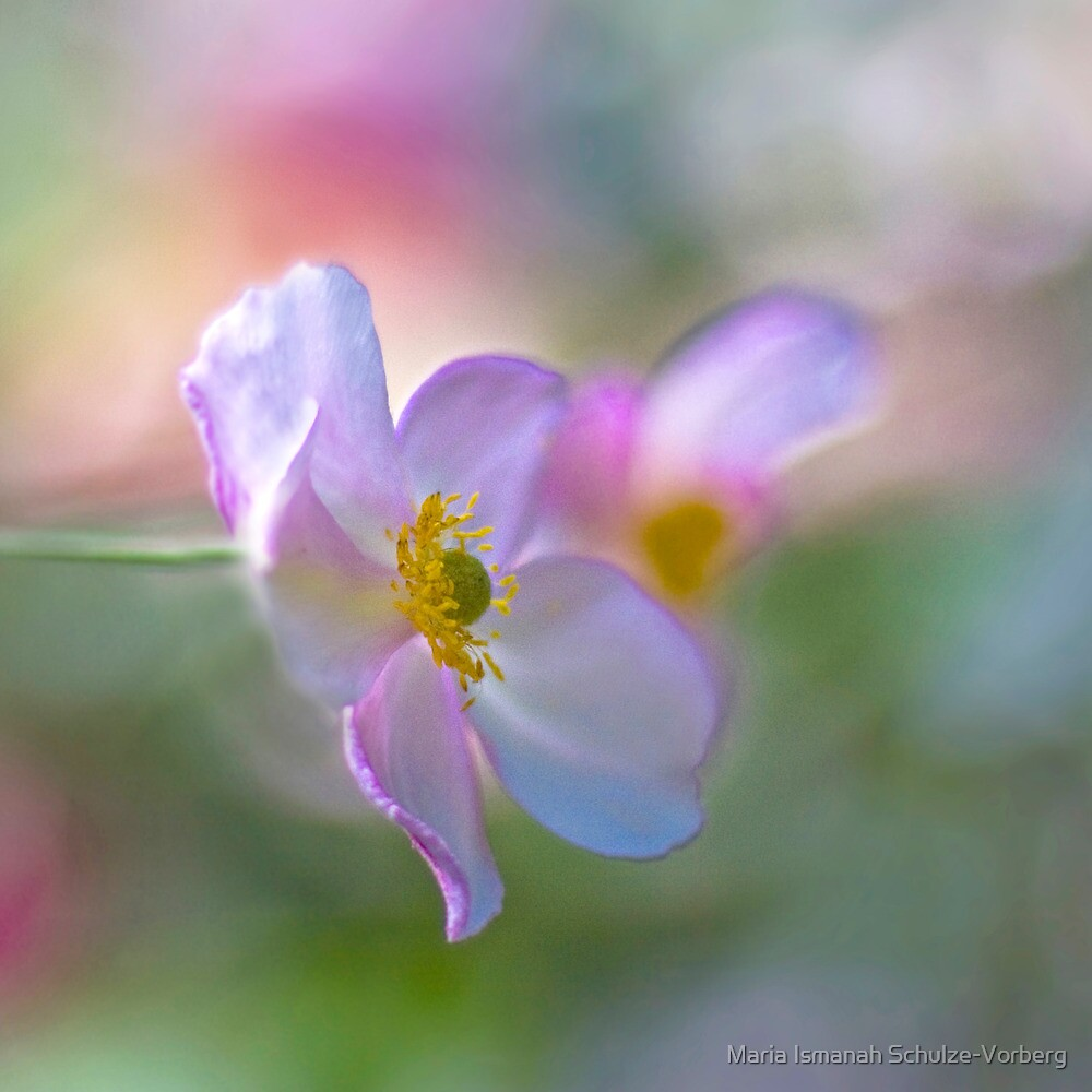 A breath of spring by Maria Ismanah Schulze-Vorberg