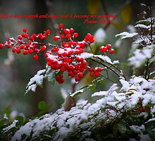 Holly Berries covered in snow.  by Audrey Woods