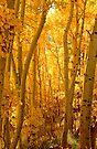 Silver Lake Aspens-1 by Zane Paxton