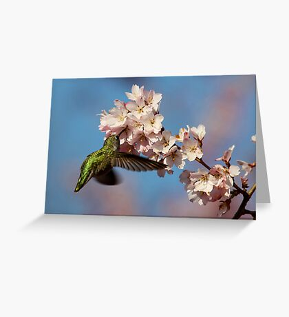 Drinking Among Clouds of Pink Blossoms Greeting Card