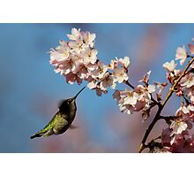 Glittery Green Dart Probes a Plume of Blooms Photographic Print