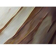 Bark Blur Photographic Print