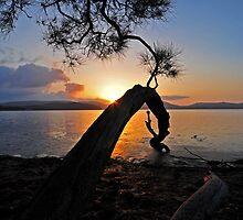 sunset lake tree highlights by bazcelt