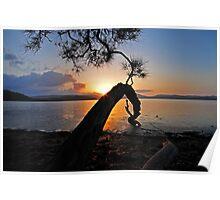 sunset lake tree highlights Poster