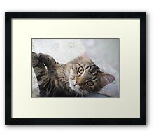 Skits playing innocent Framed Print