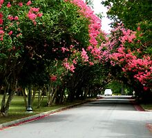 Tree-lined Street      ^ by ctheworld