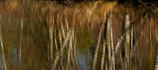 Zen and Reflection by Jeffrey  Sinnock