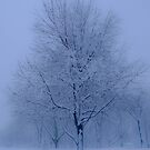 Blue Winter by jojocraig