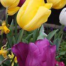 Spring's Awakening by CherylBee