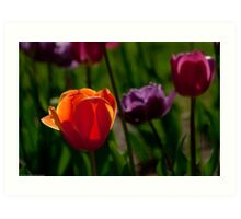 Colors of Tulips Art Print