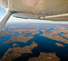Louisiana Wetlands by RayDevlin