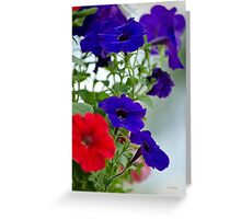 Classic Petunia Flowers Greeting Card