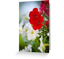 Antique Petunia Flowers Greeting Card