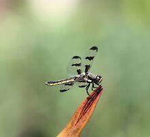 Dragonfly on Orange Flower by Lori Peters