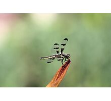 Dragonfly on Orange Flower Photographic Print