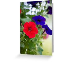 Vintage Petunia Flowers Greeting Card