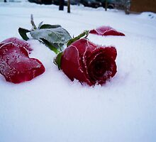 Frosted Rose by Seth LaGrange