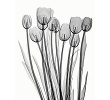 BUNCH OF TULIPS Photographic Print