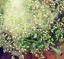 Bubble nest by Jessica Brett