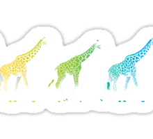 Giraffe Crossing Sticker