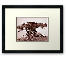 Sepia Cypress Framed Print
