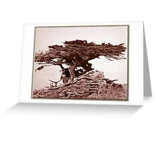 Sepia Cypress Greeting Card