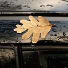 Suburban autumn by MichaelBr