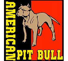 AMERICAN PIT BULL-2 Photographic Print