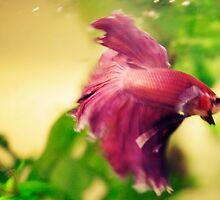 Lavender Fish by Jessica Brett