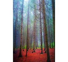 Back to forest Photographic Print