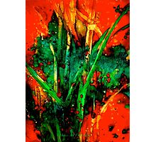 Down Amongst The Sugar Cane Photographic Print