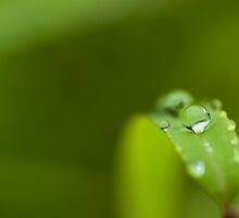 Water Droplet on Leaf by Tai Chau