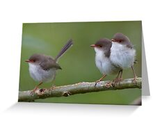 Fairy wrens - mother and girls Greeting Card