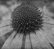 Flower in bloom by wildone
