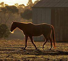Horse at first light by Rodderrick Sota